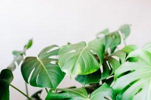 Modern Foliage Header