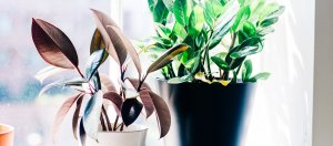 potted plants on a windowsill