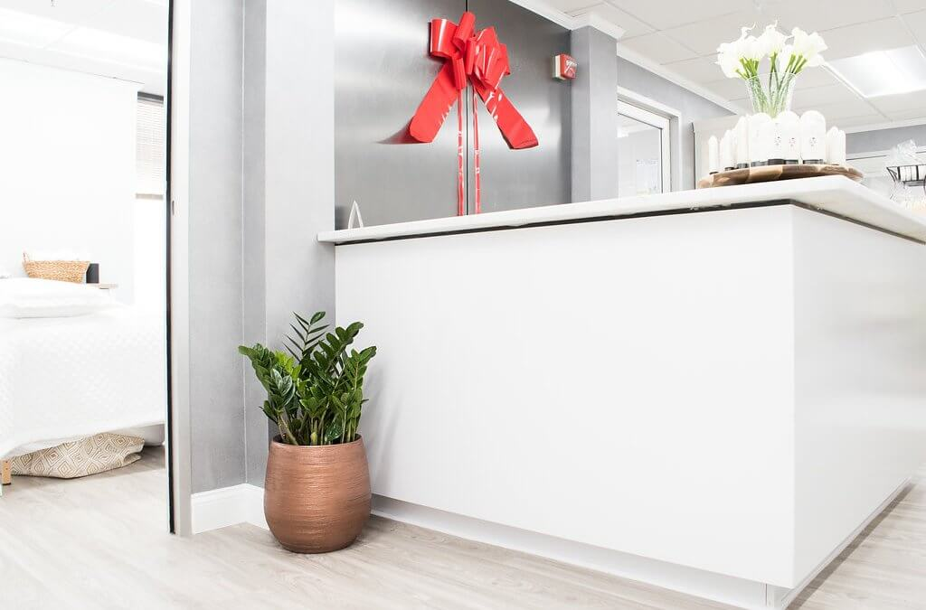 Top 5 Plants for Your Office