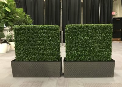 Gervais Boxwood Hedges